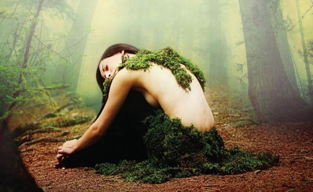 Tempo da elfi. Romanzo di boschi, lupi e altri misteri