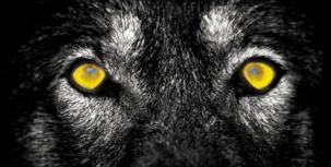 La regola del lupo, di Franco Vanni